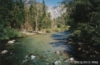 River in Sequoia